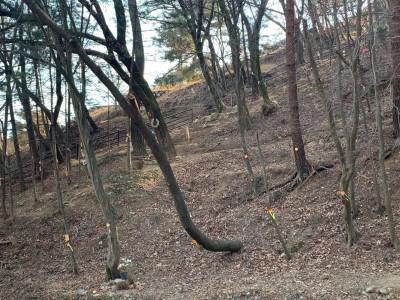 고요한 수목장