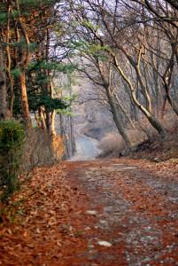 고즈넉한 낙엽길