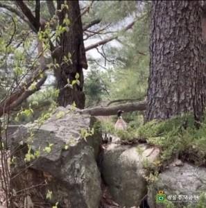 광릉추모공원 꿩