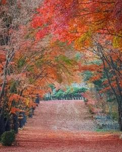 광릉추모공원 낙엽길