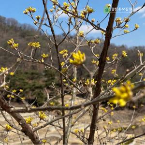 봄이 오고 있어요