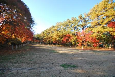 가을 재단길