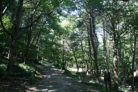 광릉추모공원 수목장
