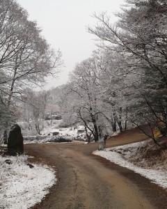 광릉추모공원 겨울