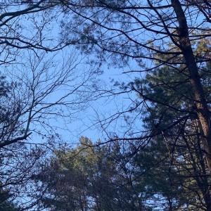 광릉추모공원의 파란하늘