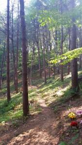 광릉추모공원 숲 산책로