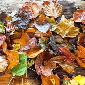 광릉추모공원의 예쁜 낙엽들