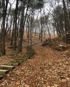 광릉추모공원 죽엽산 산길